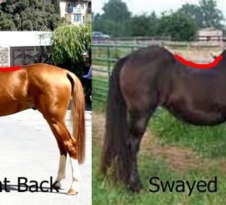 Het perfecte paard?