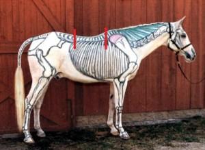 skeletzadel