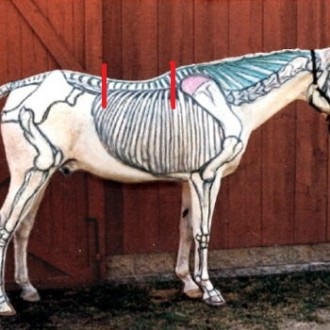 Paarden Binnenste Buiten